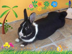 Daisy, bunny
