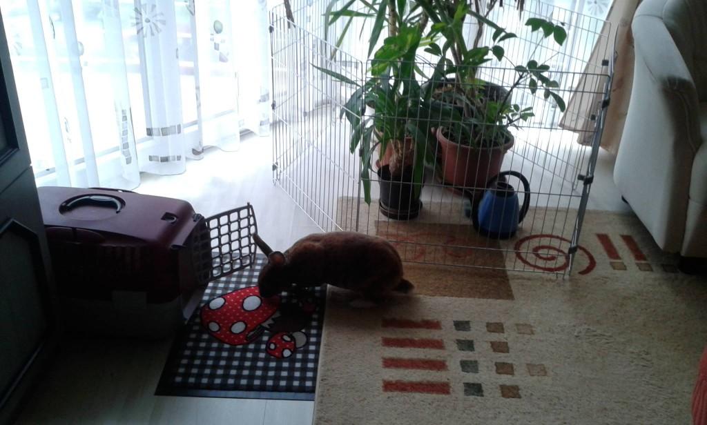 nyuszi a lakásban, növény elkerítve
